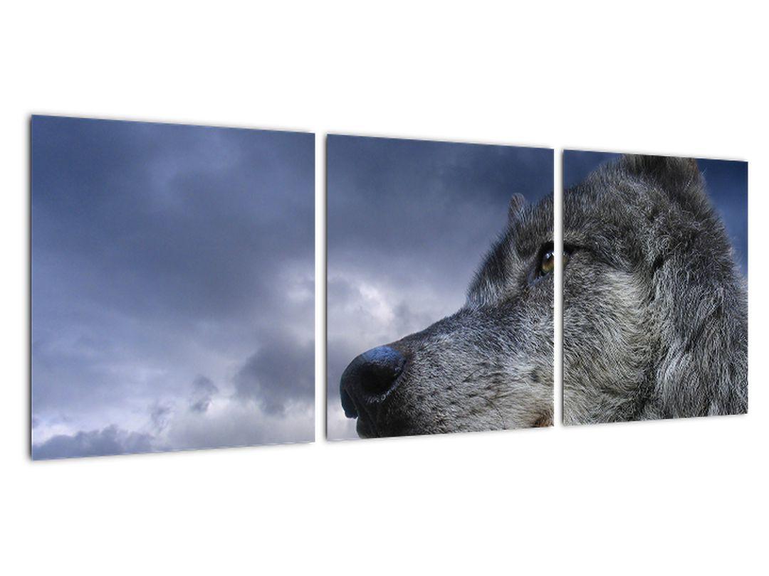 Slika - volk