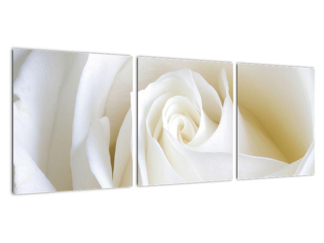 Slika - bele vrtnice