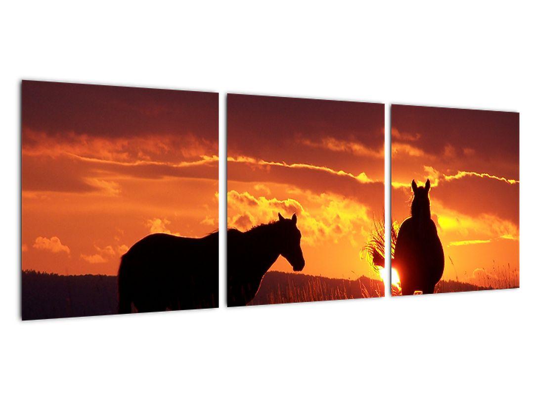 Slika - konji ob sončnem zahodu