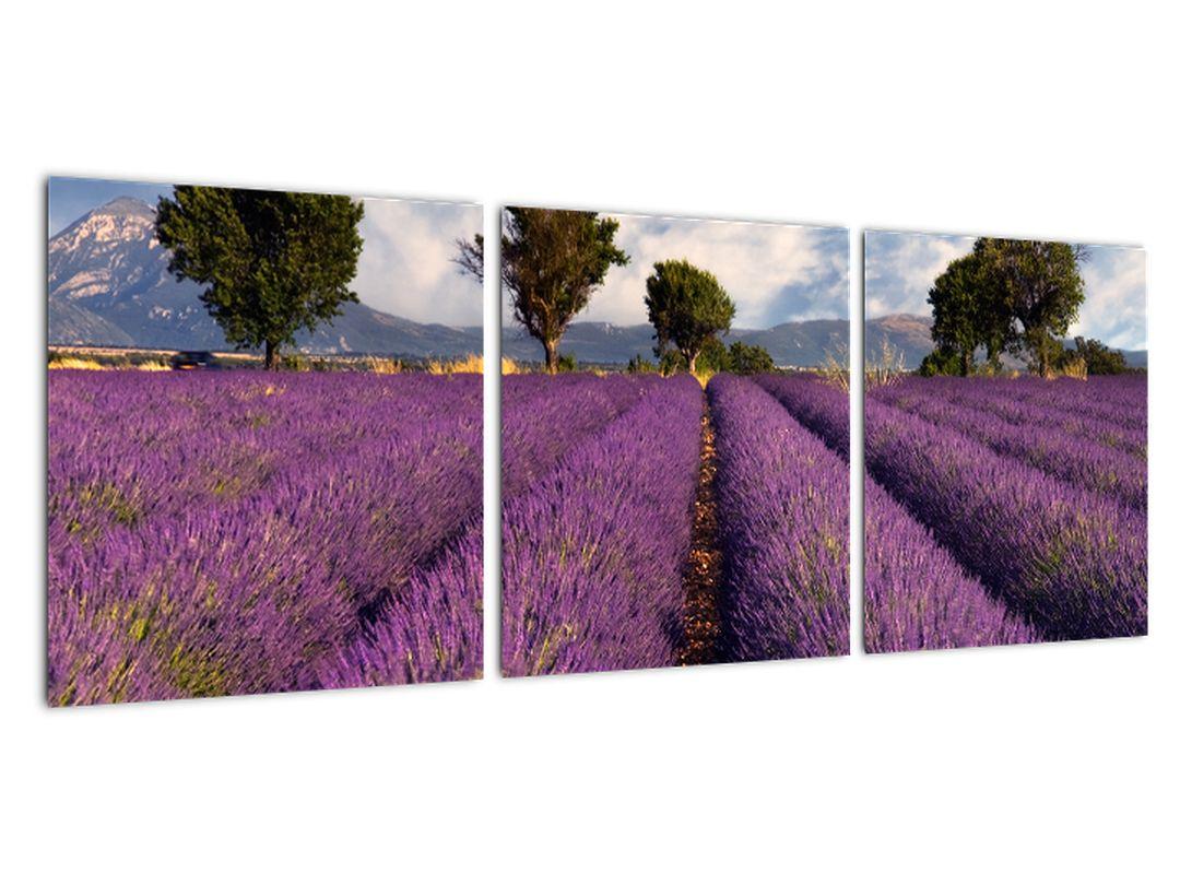 Slika - sivkino polje