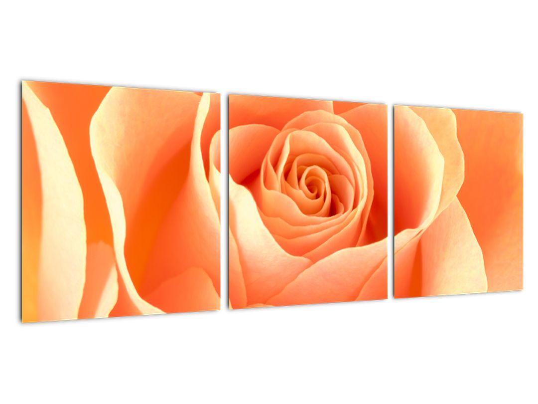 Slika - oranžne vrtnice