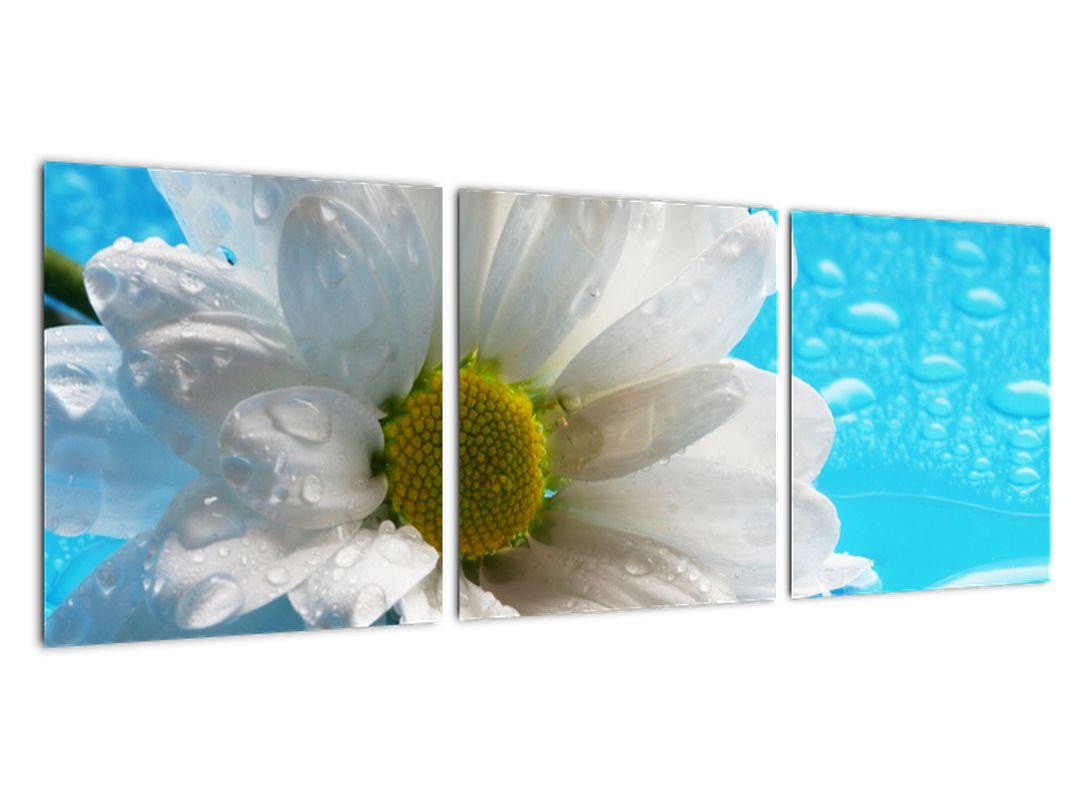 Slika - cvet marjetice