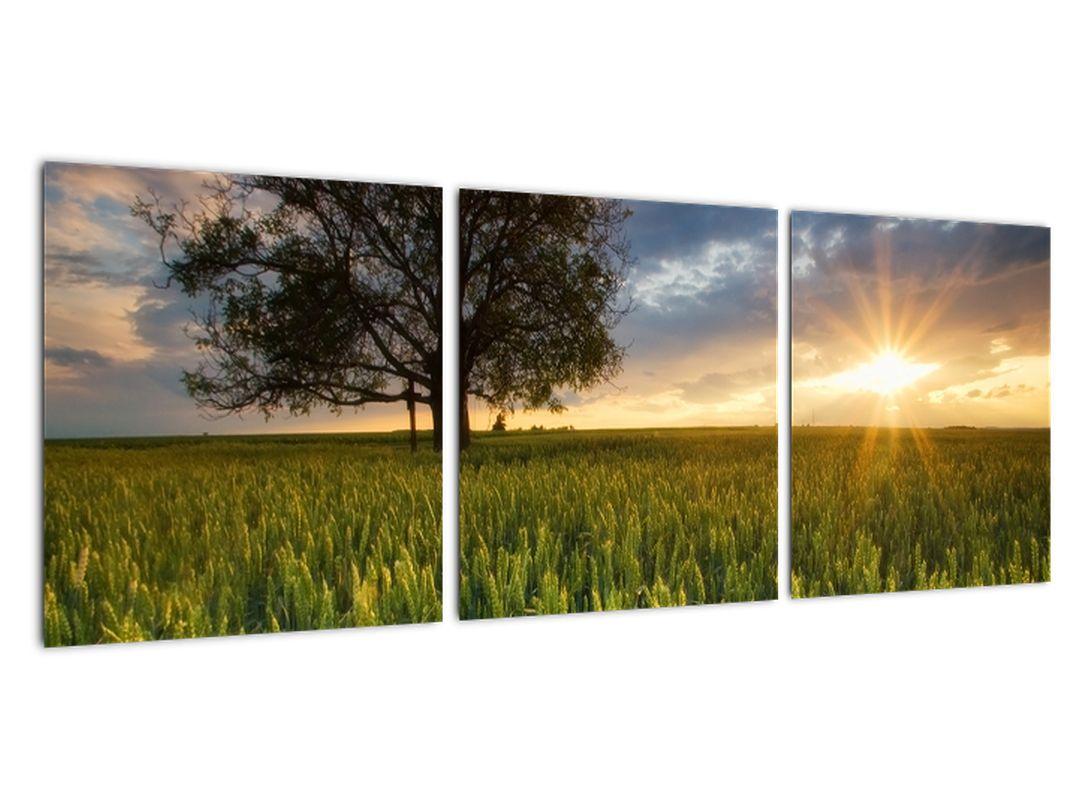 Moderne slike - polje