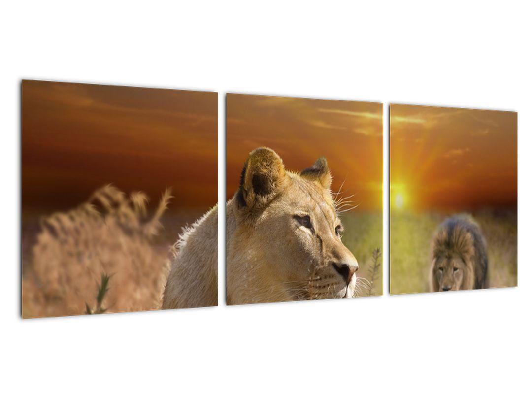 Slike živali