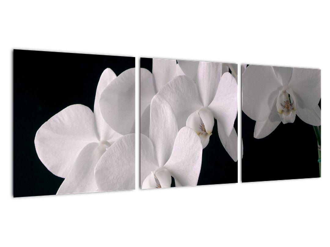 Slika - bela orhideja