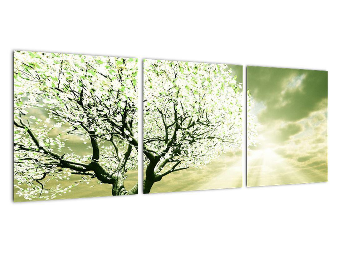 Pomladno drevo - moderne slike