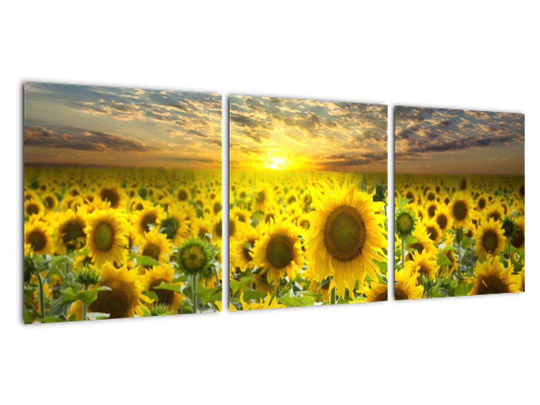 Slika - sončnica