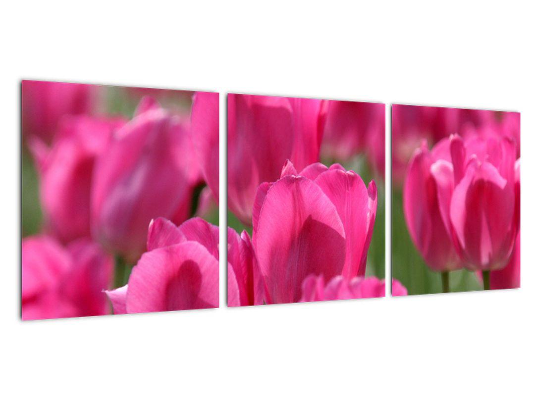 Slike - tulipani