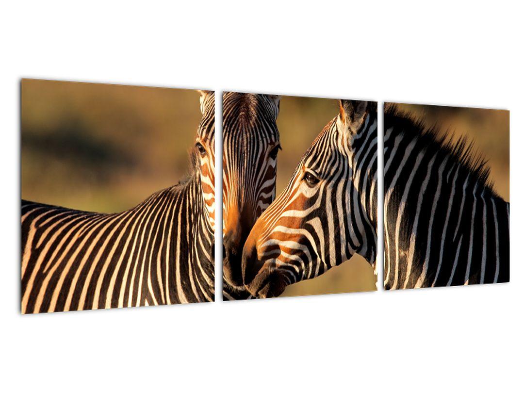 Slika - zebre