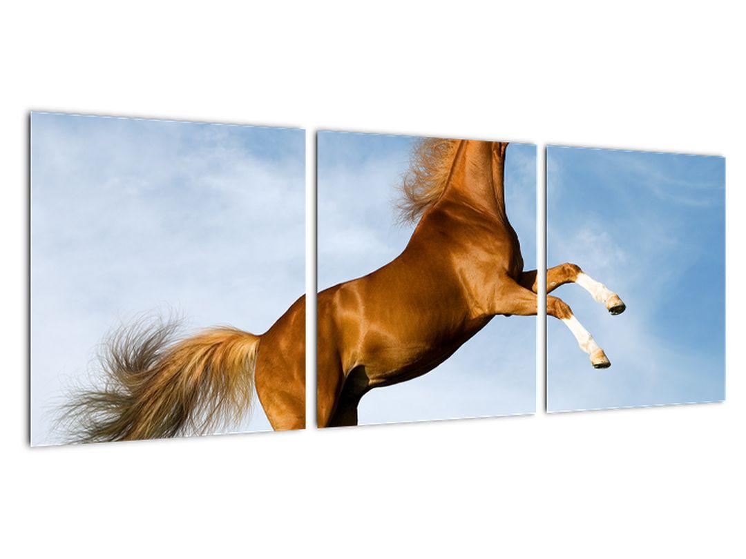 Slika - konji na hrbtu