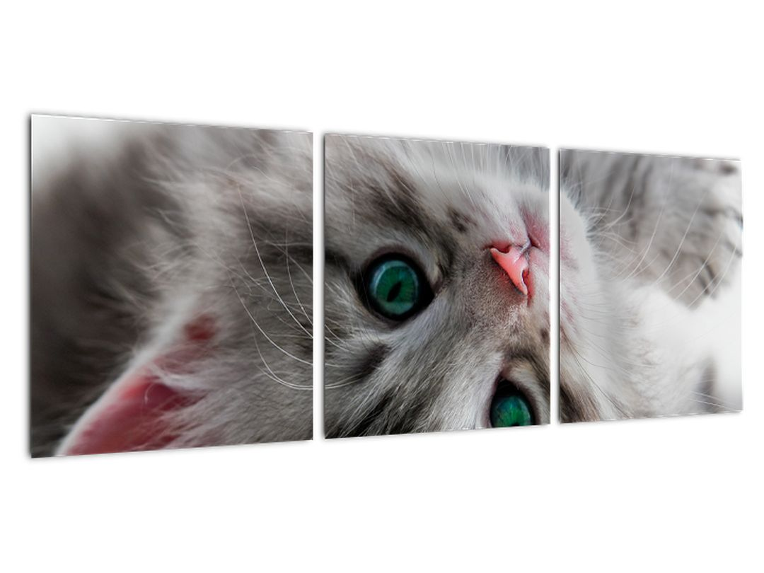 Slika - mačke