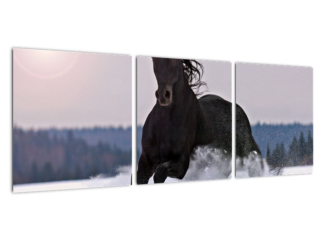Slika - konji v snegu