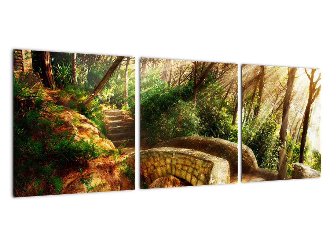 Slika - gozdne poti