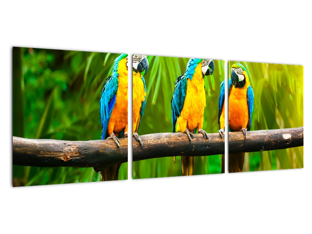 Moderna slika - papige