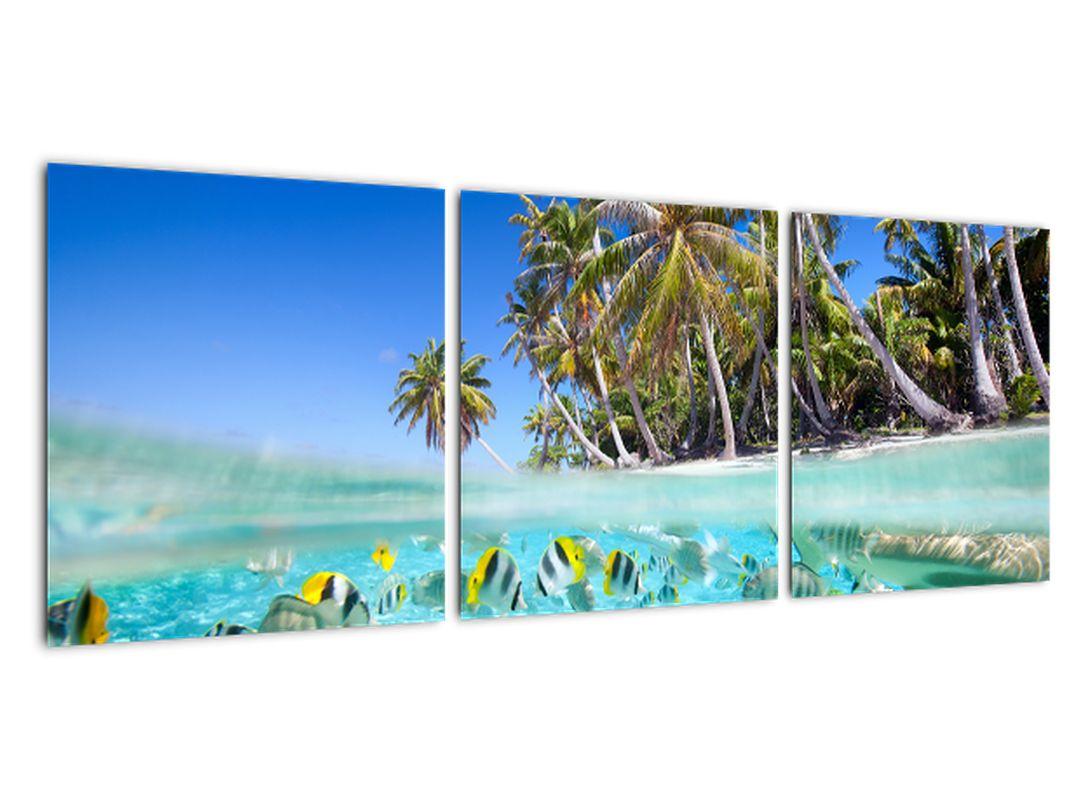 Slika - tropsko morje