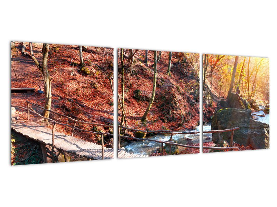 Slika - jesenska cesta skozi gozd