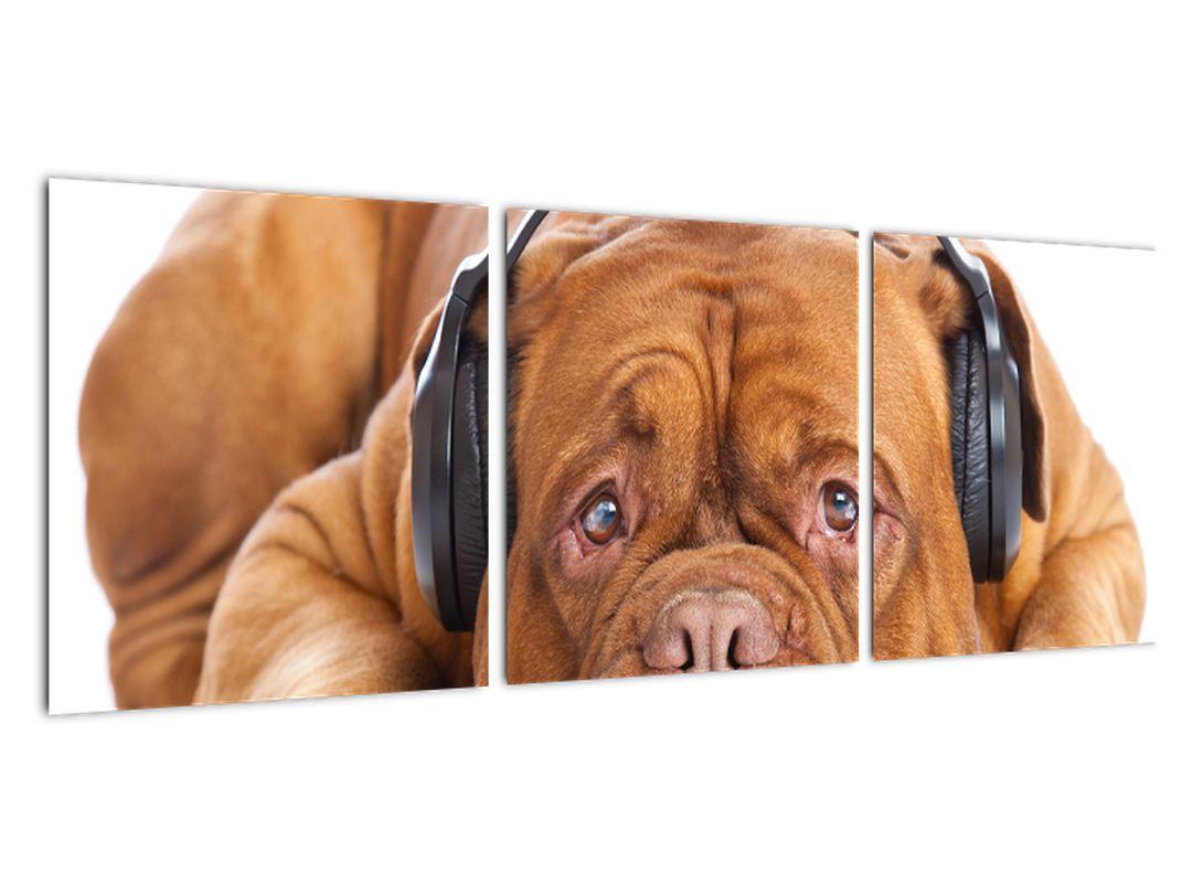 Moderna slika - pes s slušalkami