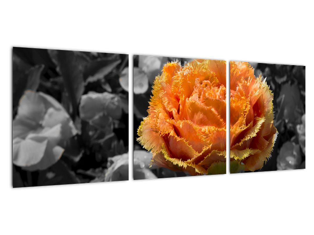 Oranžna roža na črno -belem ozadju - slika