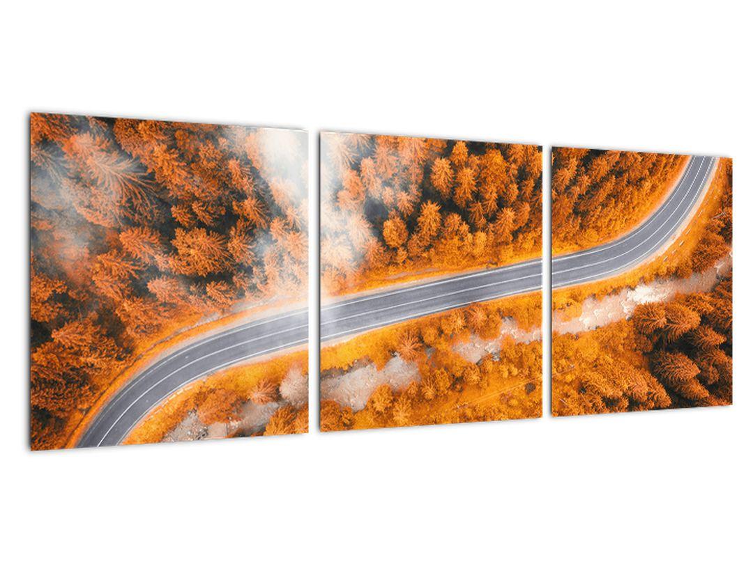 Cesta skozi gozd - moderne slike na steni