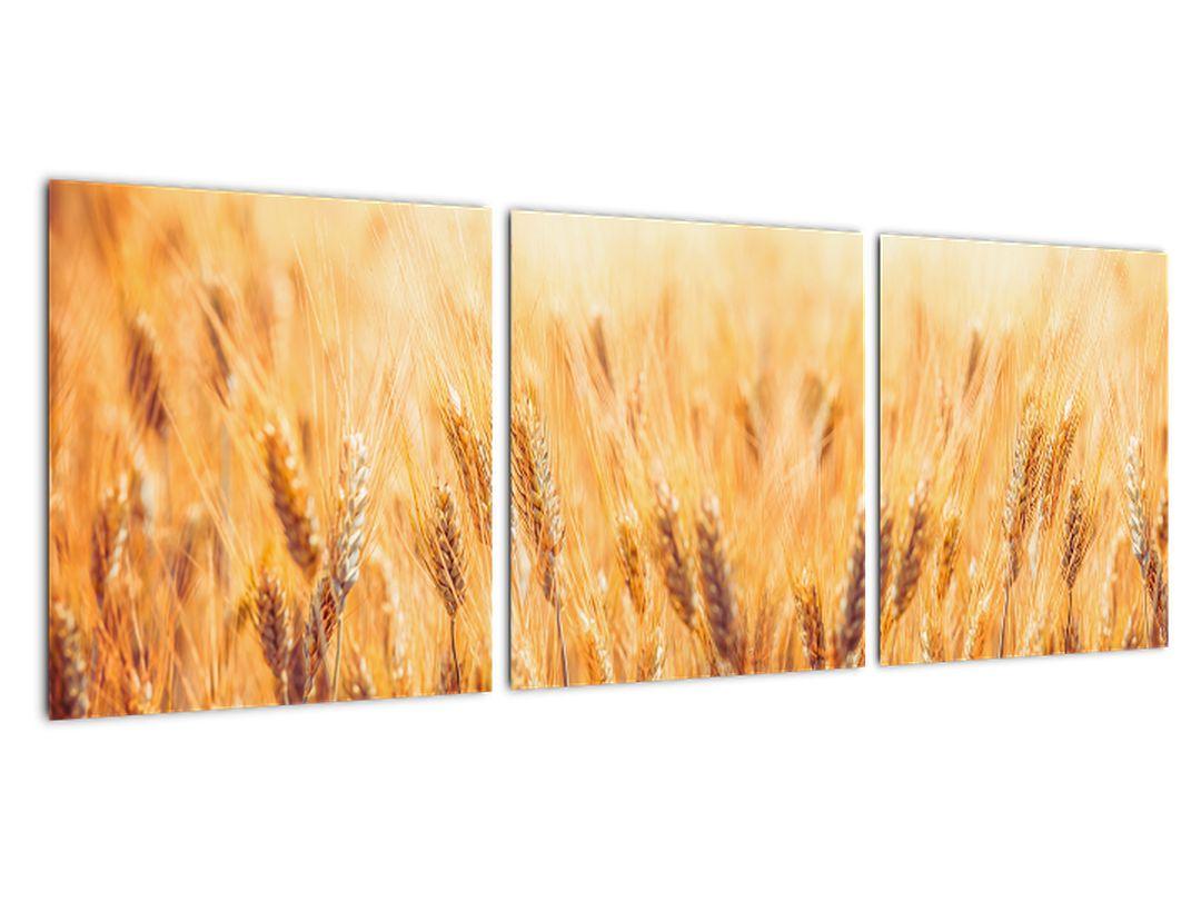 Slika - žito na polju