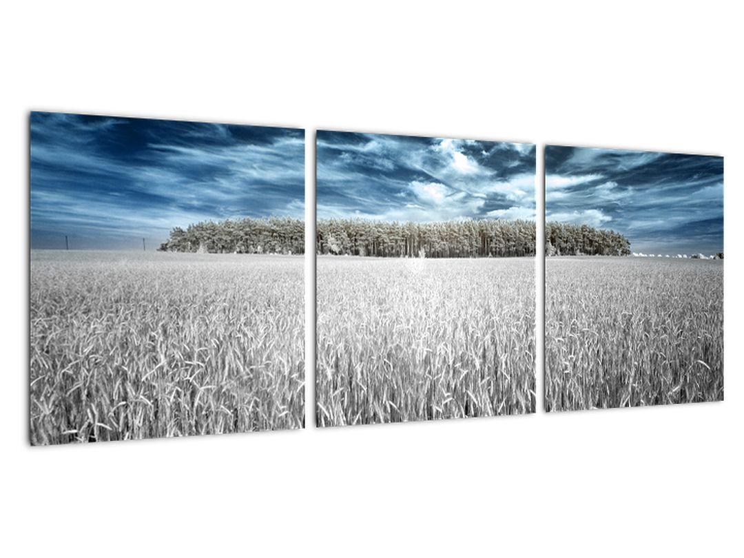 Moderna slika - travnik z žitom
