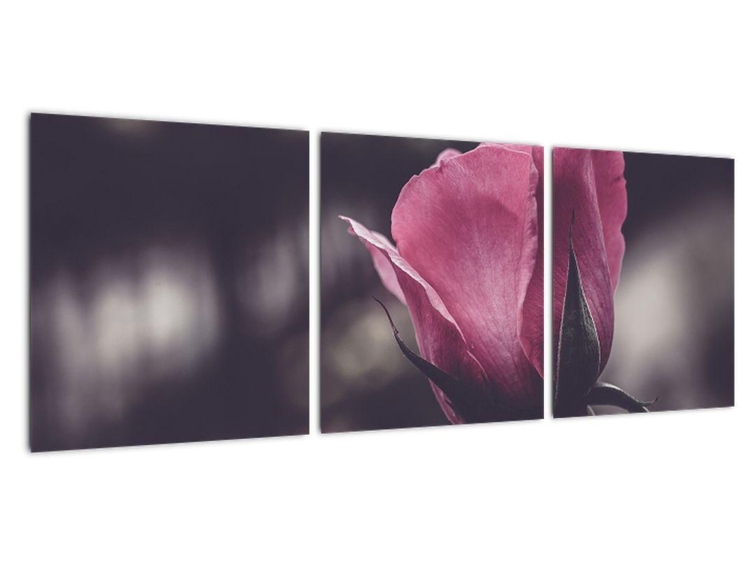 Podoba vrtnice